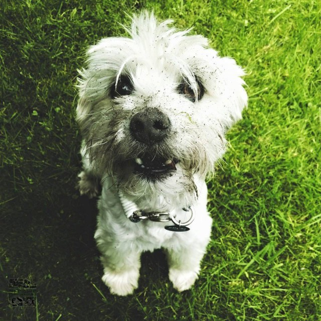 miDoggy bucket list Hunde