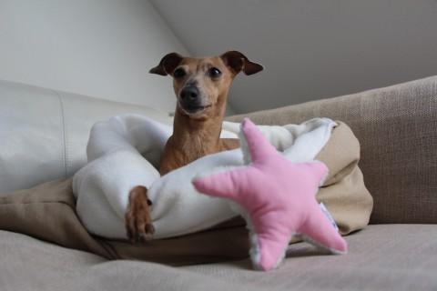 Produkttest| Wunderschöner Hundeschlafsack: der Herbst kann kommen