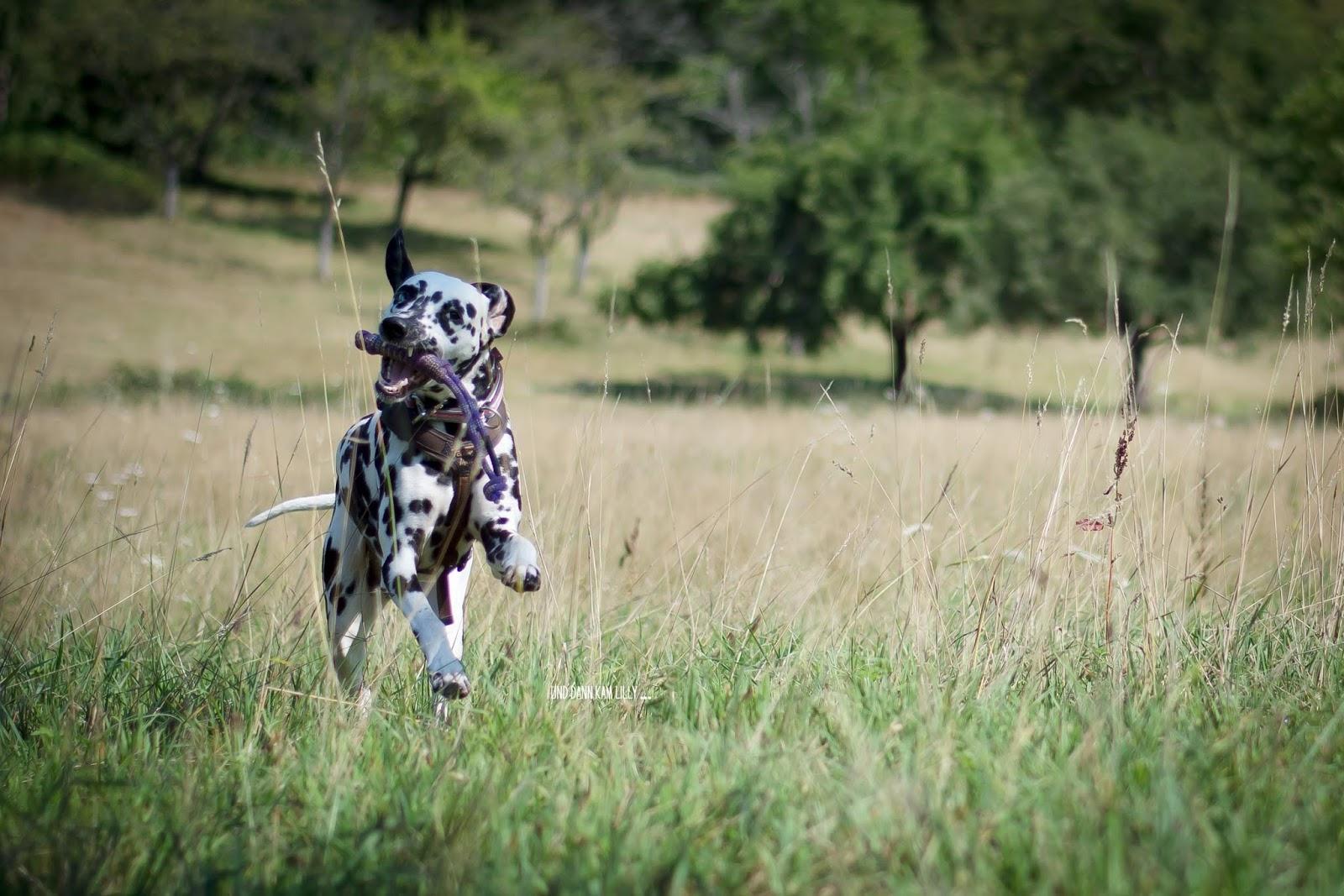 Treusinn Spiely Hundeblog miDoggy
