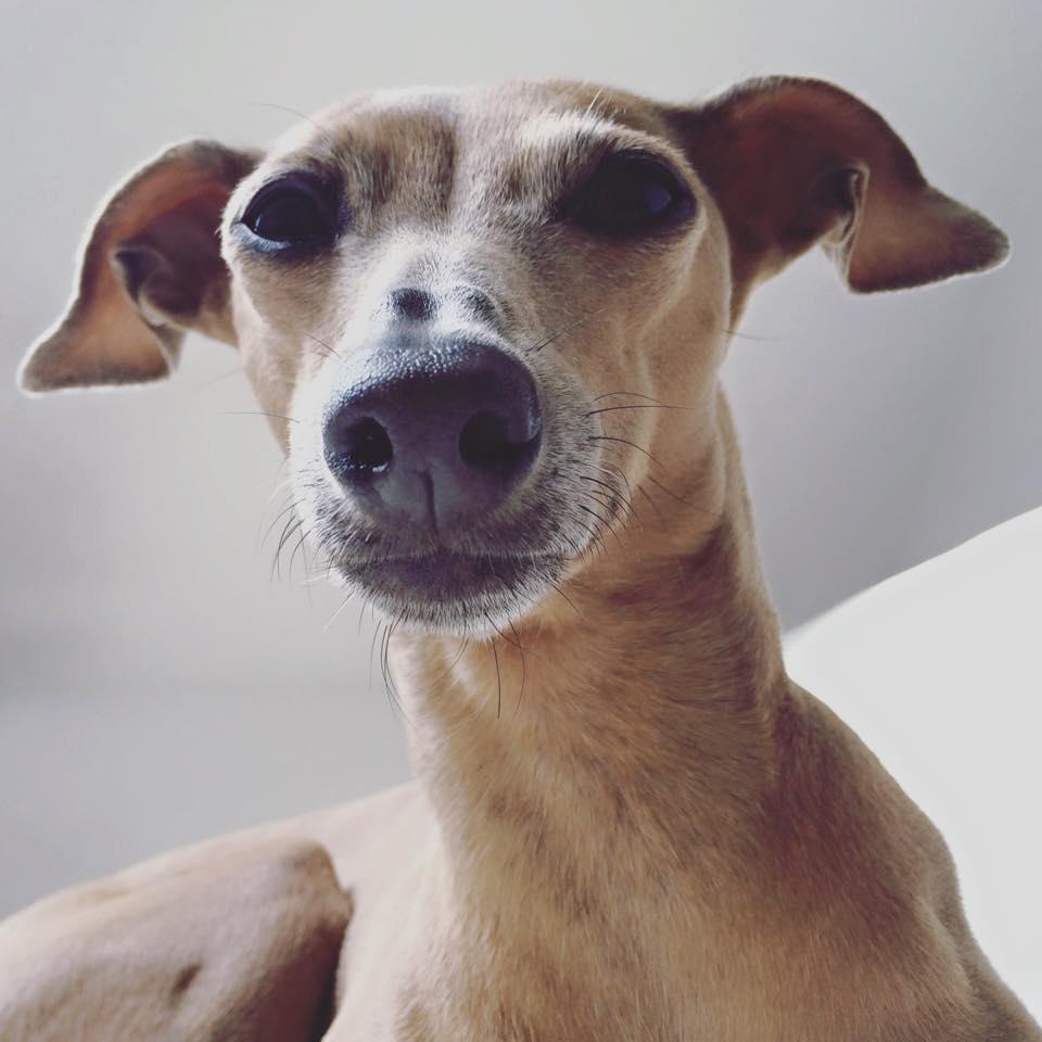 Wochenrückblick Hundeblog miDoggy