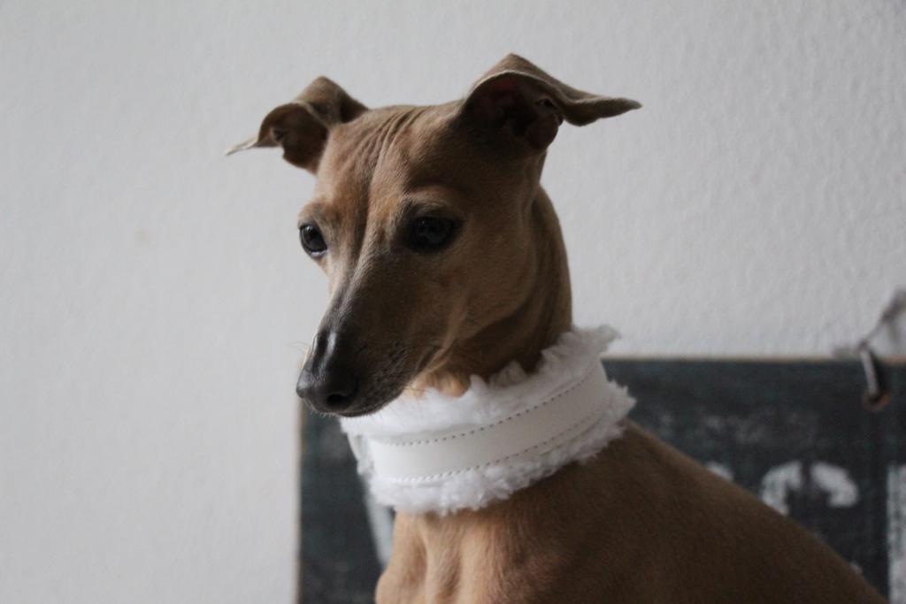 Fellhalsband von LeRoiy Hundeblog miDoggy