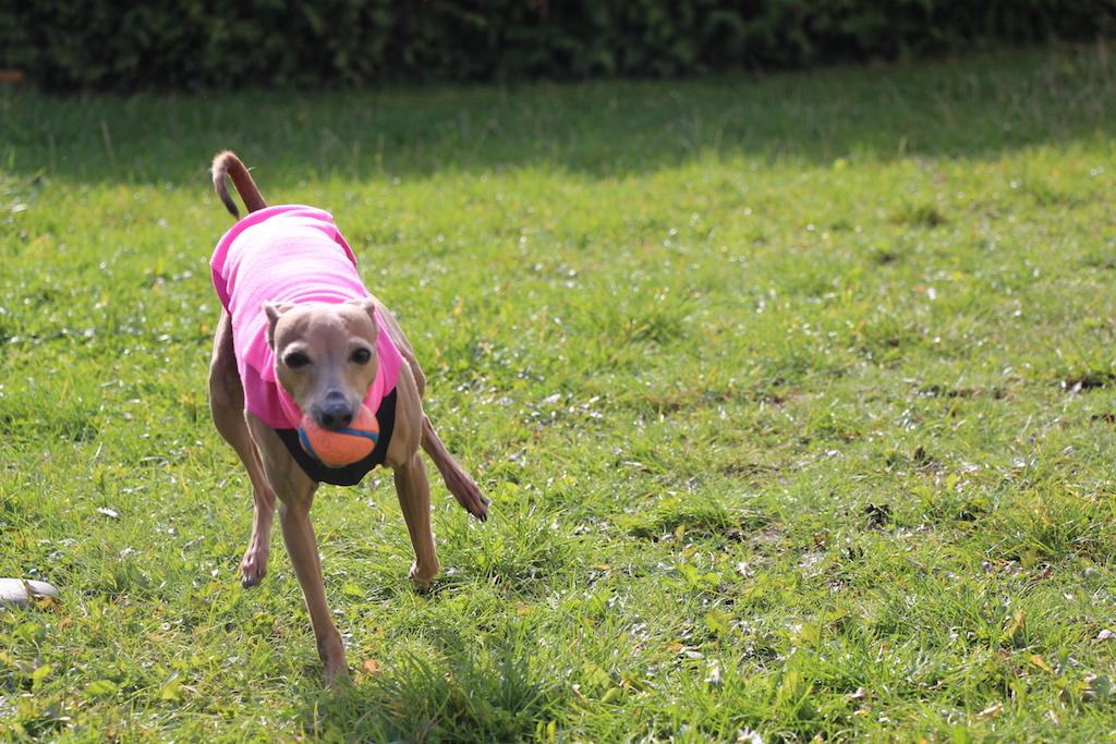 Hundemantel sportlich Hundeblog miDoggy