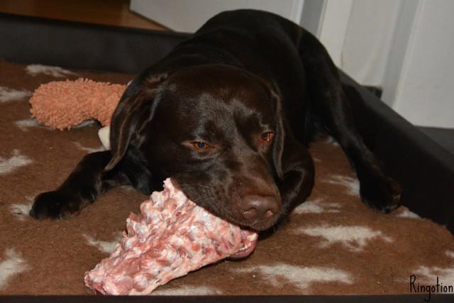 Lolas Freunde lieben Kudde Hundebett Visco