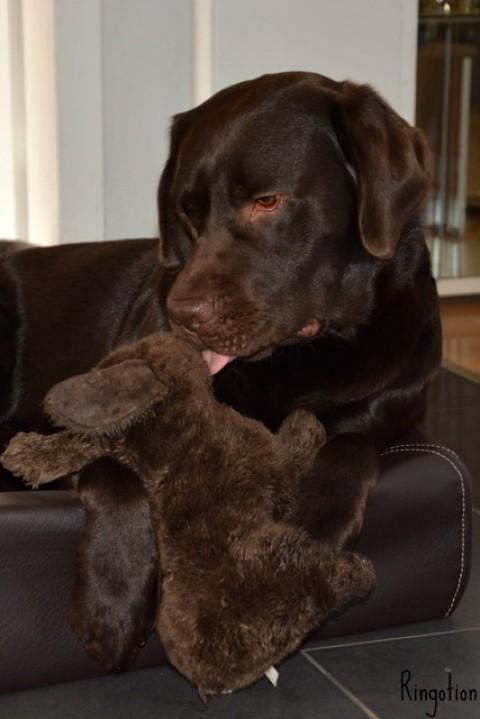 [Lola's Freunde lieben] Kudde Hundebett Visko