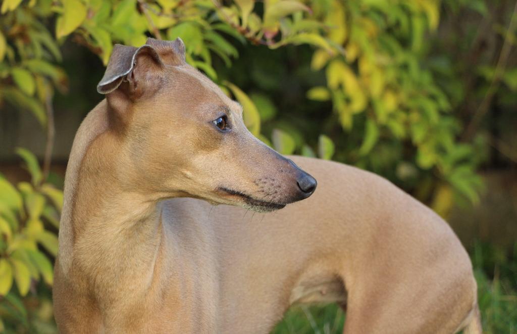 Tipps Herbst Hunde Hundeblog miDoggy