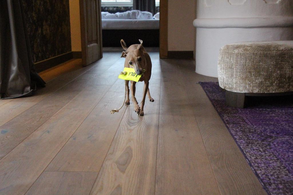 Apportierdummy Firefighter Oscars Hundeblog miDoggy