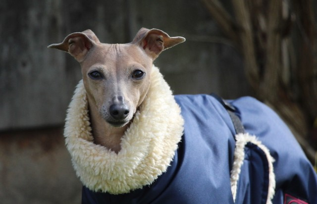 Hundemantel Winter Hundeblog miDoggy