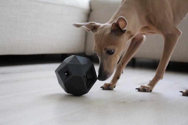 Leckerli Ball The Odin Hundeblog miDoggy