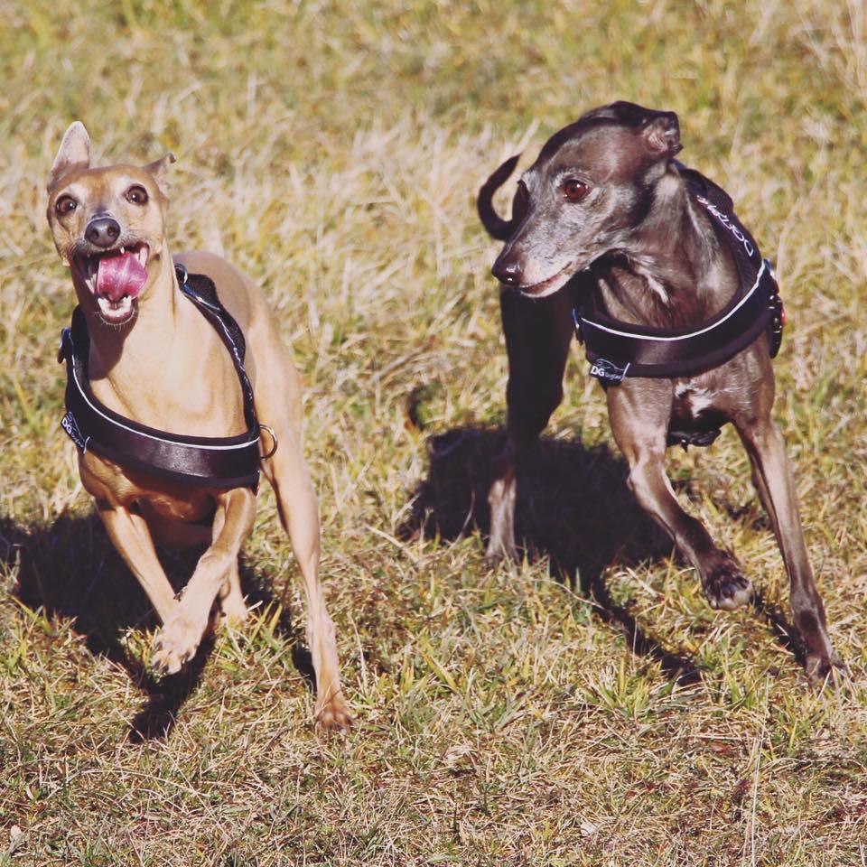 ola's Wochenrückblick Hundeblog miDoggy