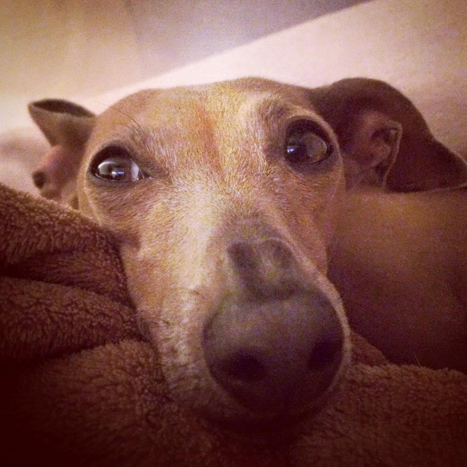 Lola's Wochenrückblick Hundeblog miDoggy