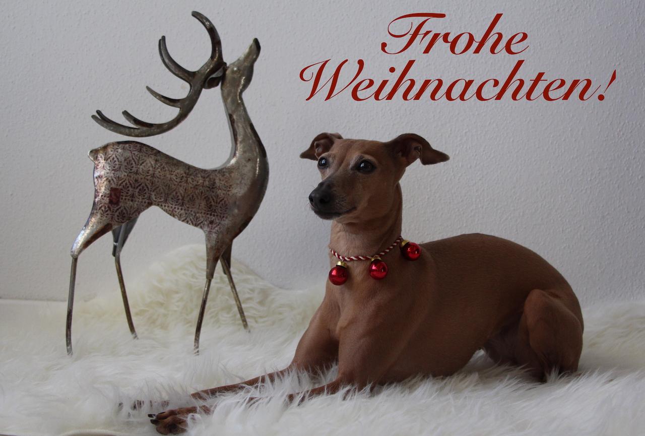 Weihnachten Hundeblog miDoggy