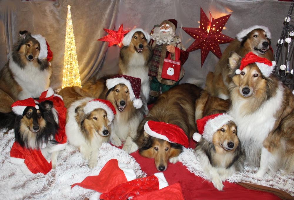 Weihnachtsgeschichte Icarus Hundeblog miDoggy