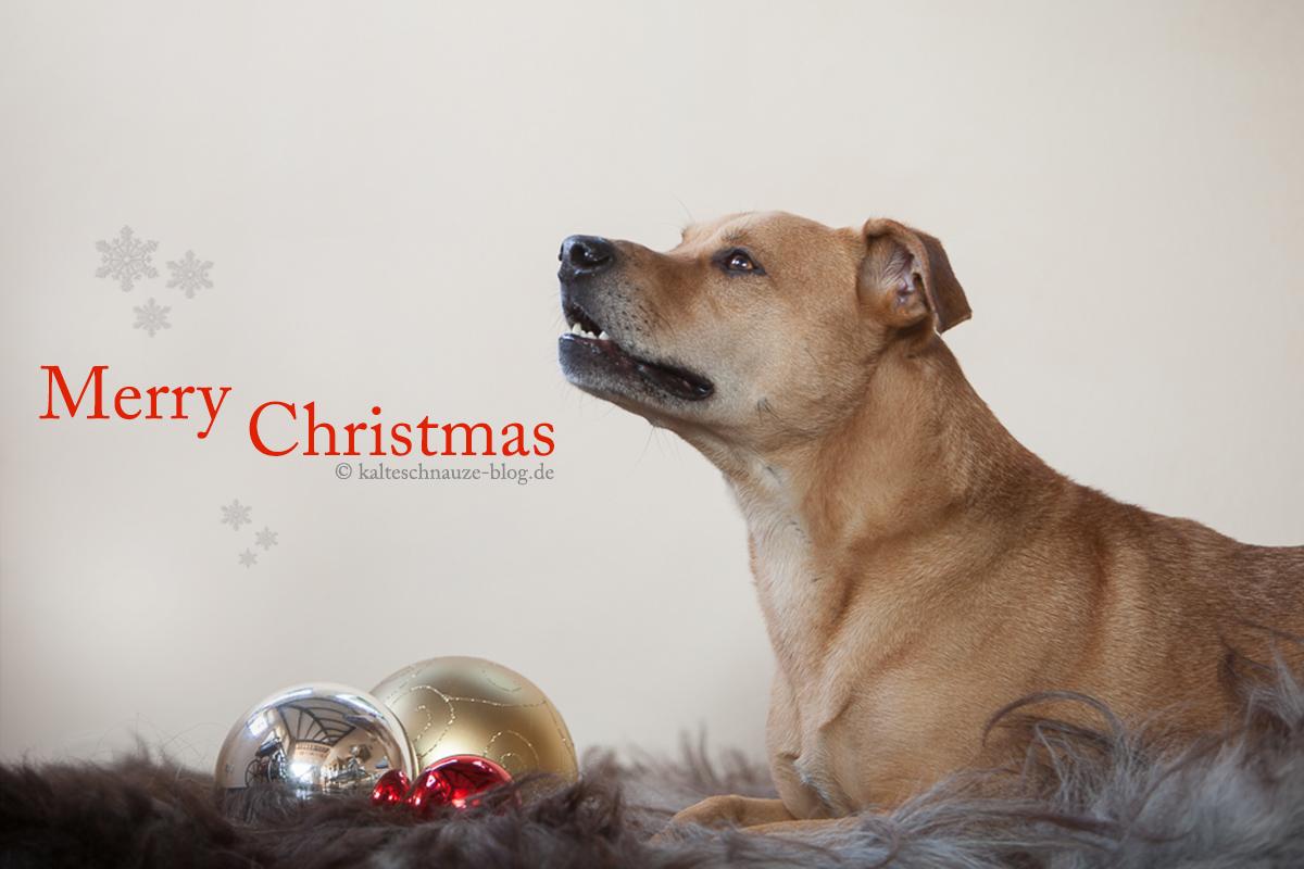 Weihnachtsgeschichte KalteSchnauzeBlog miDoggy