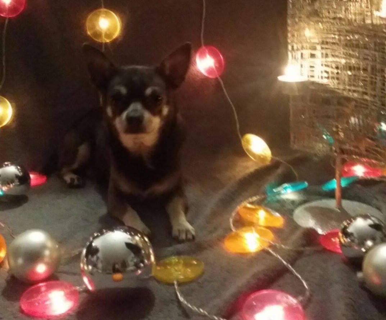 Weihnachtsgeschichte Larissa und Blue miDoggy