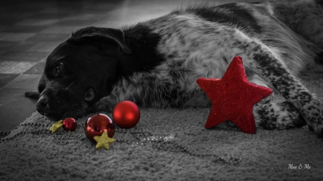 Weihnachtsgeschichte Moe Hundeblog miDoggy