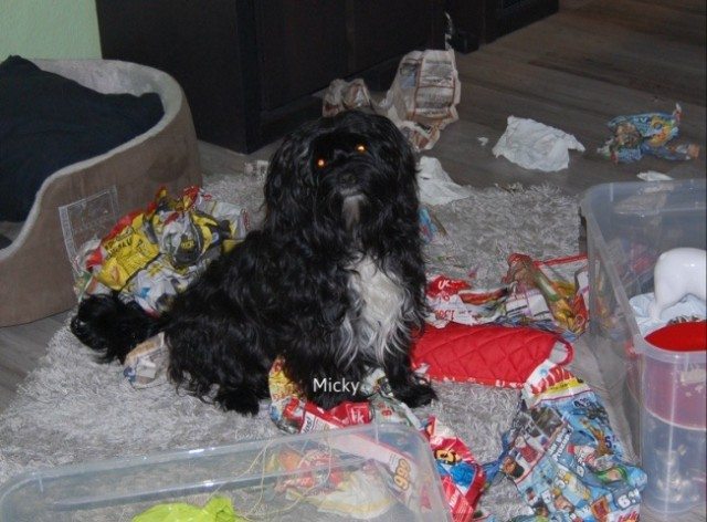 Weihnachtsgeschichte mickyundso Hundeblog miDoggy