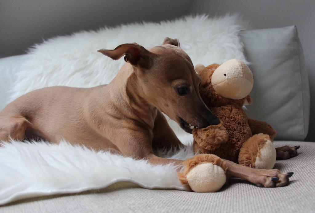 Wichteln Weihnachten 2015 Hundeblog miDoggy