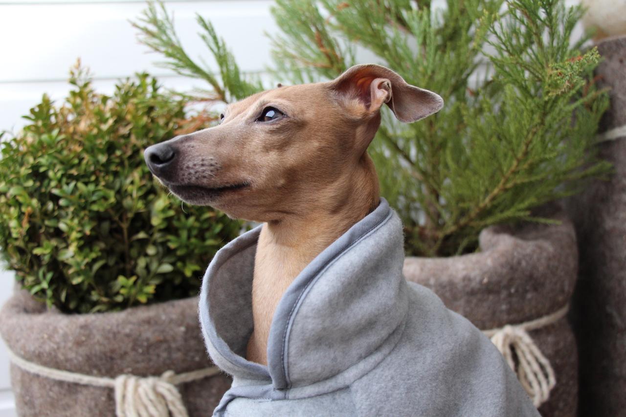 Fleece Hundemantel Hundeblog miDoggy