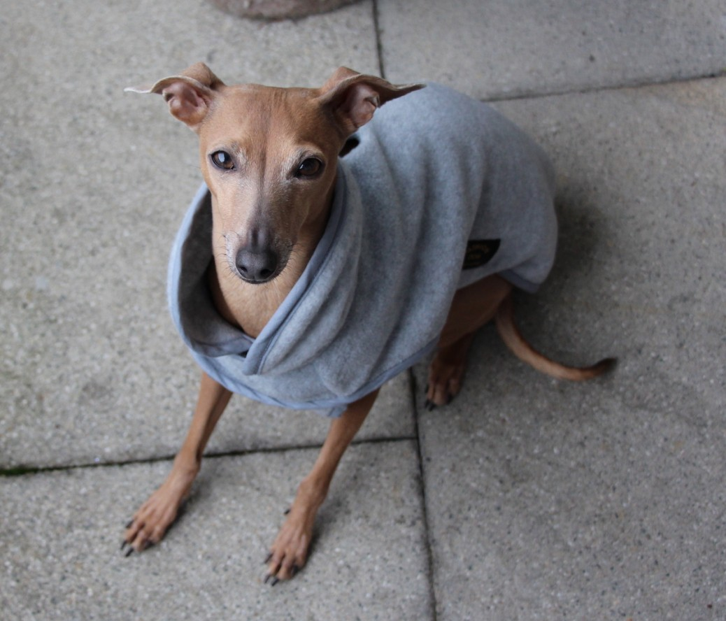 Fleece Hundemantel Hundeblog miDoggy