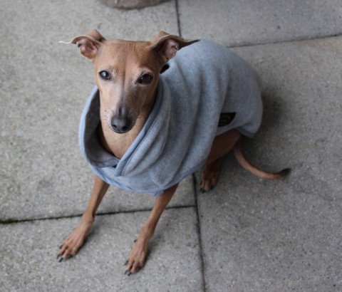 [Lola liebt Hundemäntel] Schick in Fleece