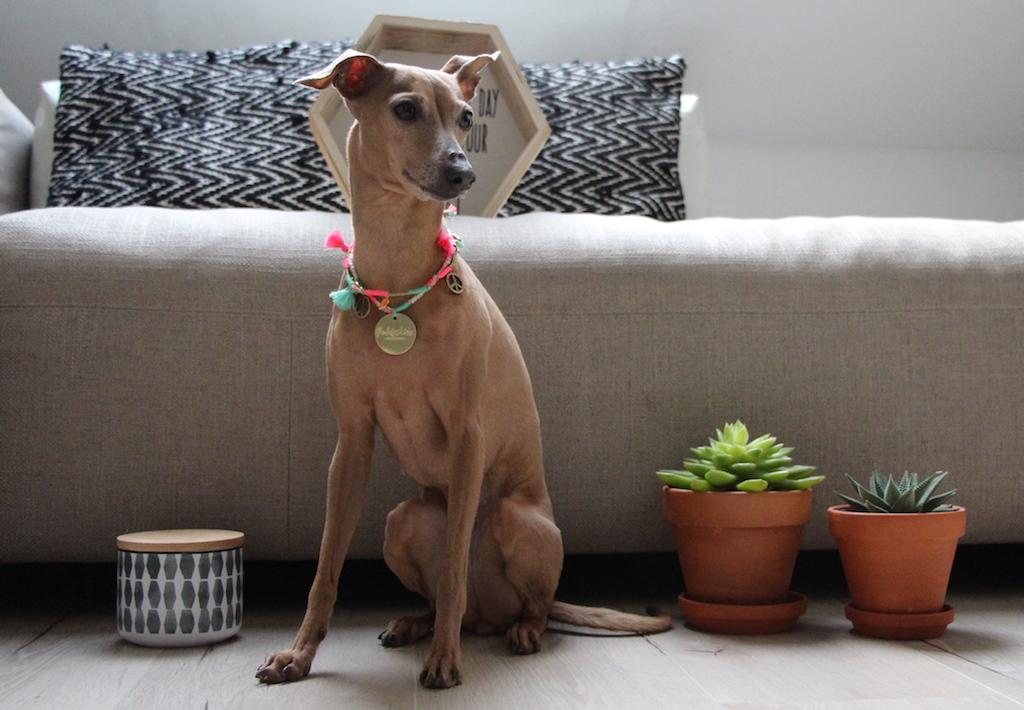 Halskette für Hunde Rudel Liebe Hundbelog miDoggy
