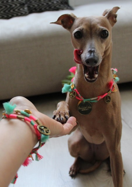 Halskette für Hunde Rudel Liebe Hundbelog miDoggy 1404