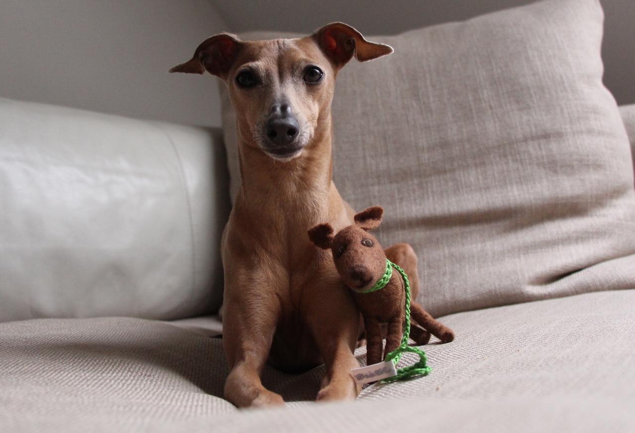 Kotbeutelspender personalisiert Filz-Land Hundeblog miDoggy