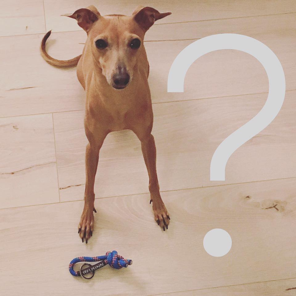 Lola's Wochenrücblick Hundeblog miDoggy