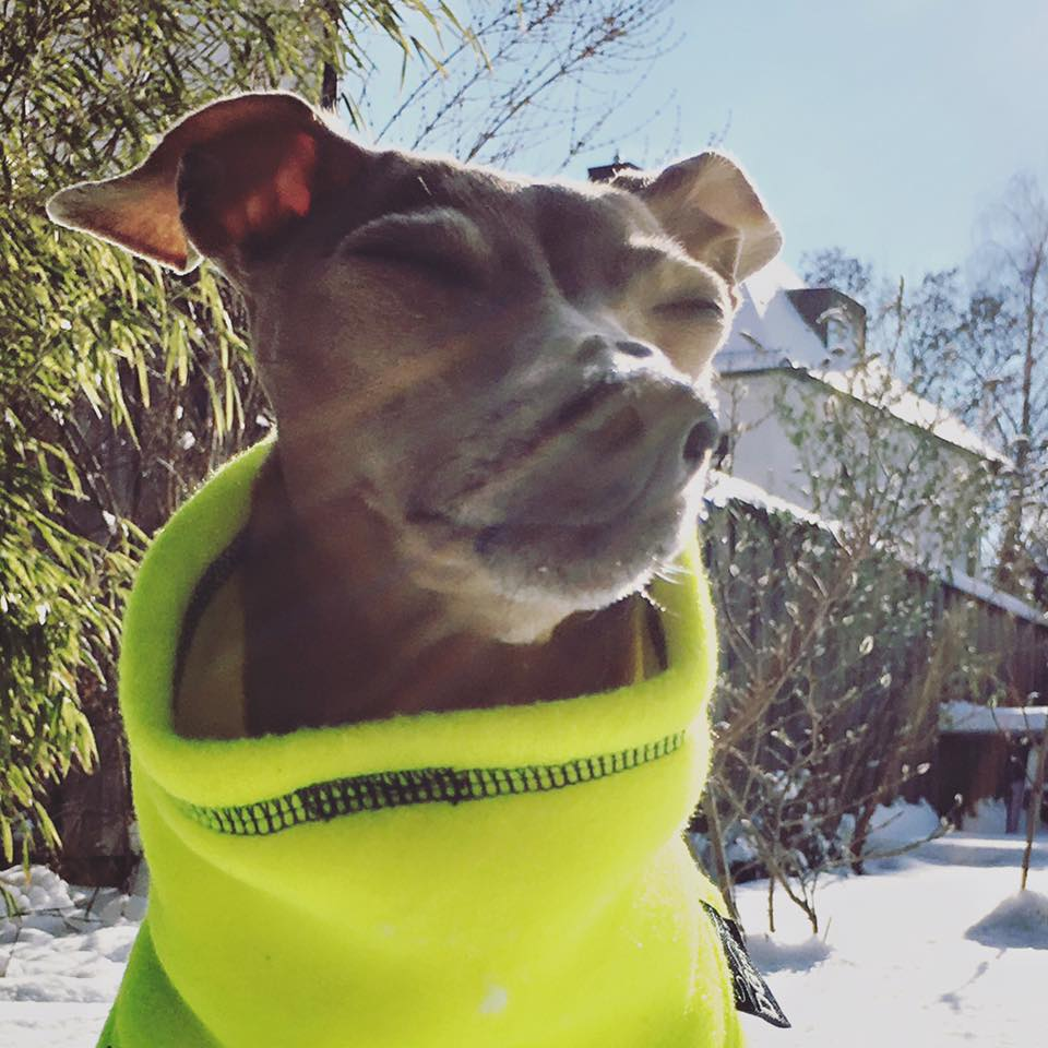 Lola's Wochenrückblick Hundbelog miDoggy