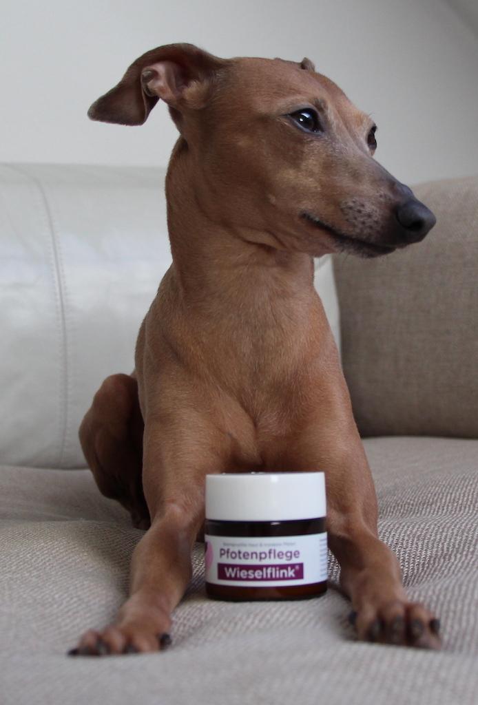 Pfotenpflege Test Hund & Herrchen Hundbelog miDoggy