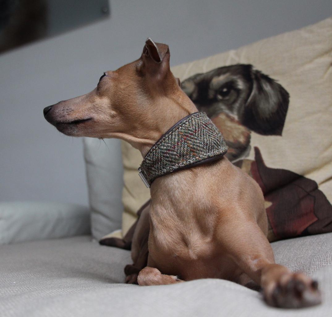 Tweed Halsband Hundeblog miDoggy