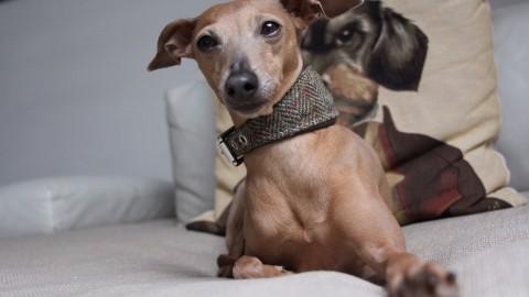 Produkttest [Halsband] Lola's neuestes Schmuckstück aus Tweed
