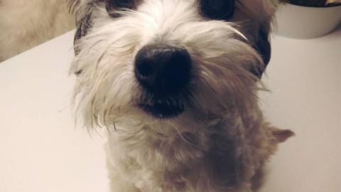 [eDgars Kolumne] Mein Hund uff Schloss Wotersen – een Kurzbericht