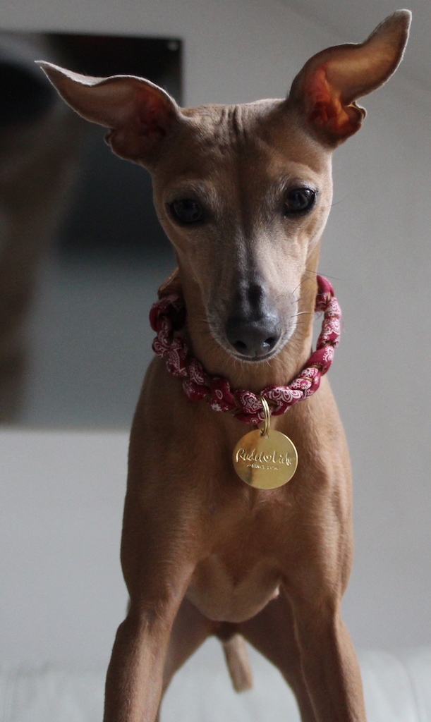Halskette BLOOM Rudelliebe Hundeblog miDoggy