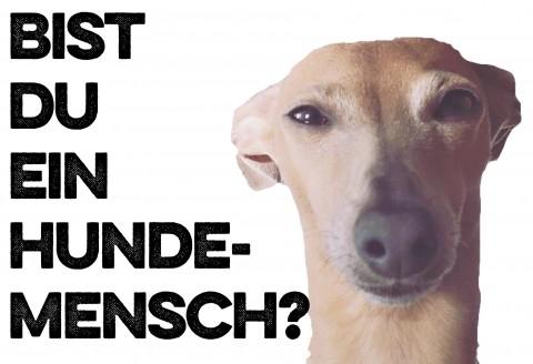 Bist Du ein Hundemensch?