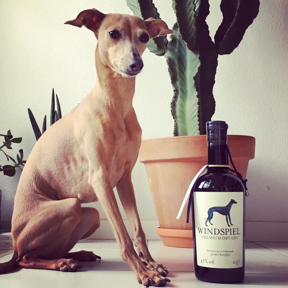 Lola's Wochenrückblick 1 Windspiel Gin