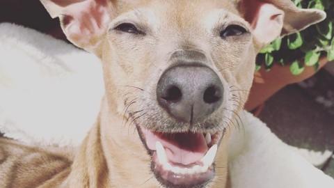 Heute habe ich leider kein Hundezubehör für Euch….