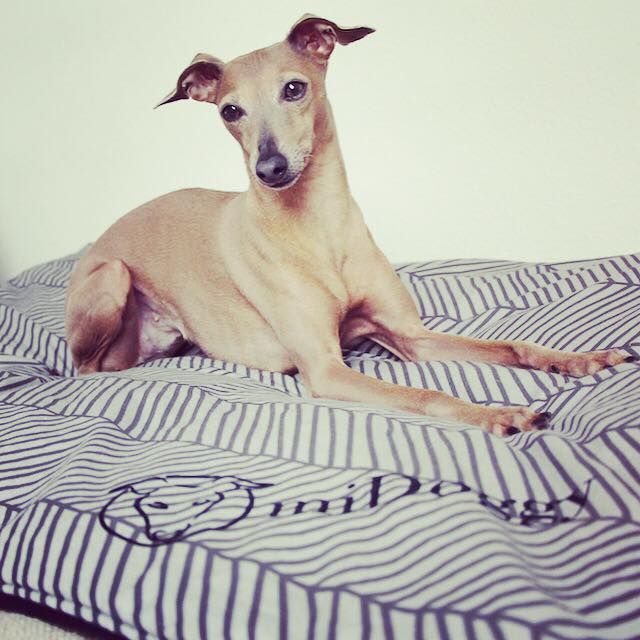 Hundeblog miDoggy Woche 15