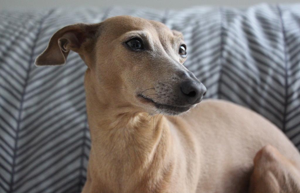 Hundedecke Zucker & Zimt Design Hundeblog miDoggy