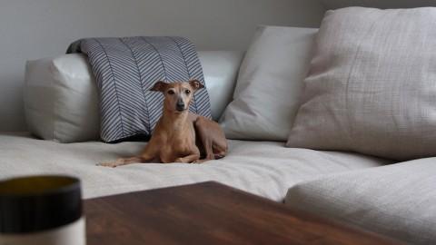 Produkttest [Hundedecke] Wunderhübsch individuell und einzigartig!