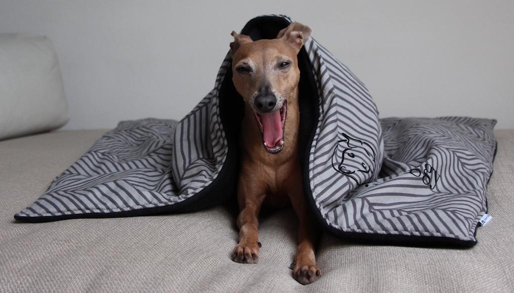 Kuscheldecke Hund Zucker & Zimt Design Hundeblog miDoggy