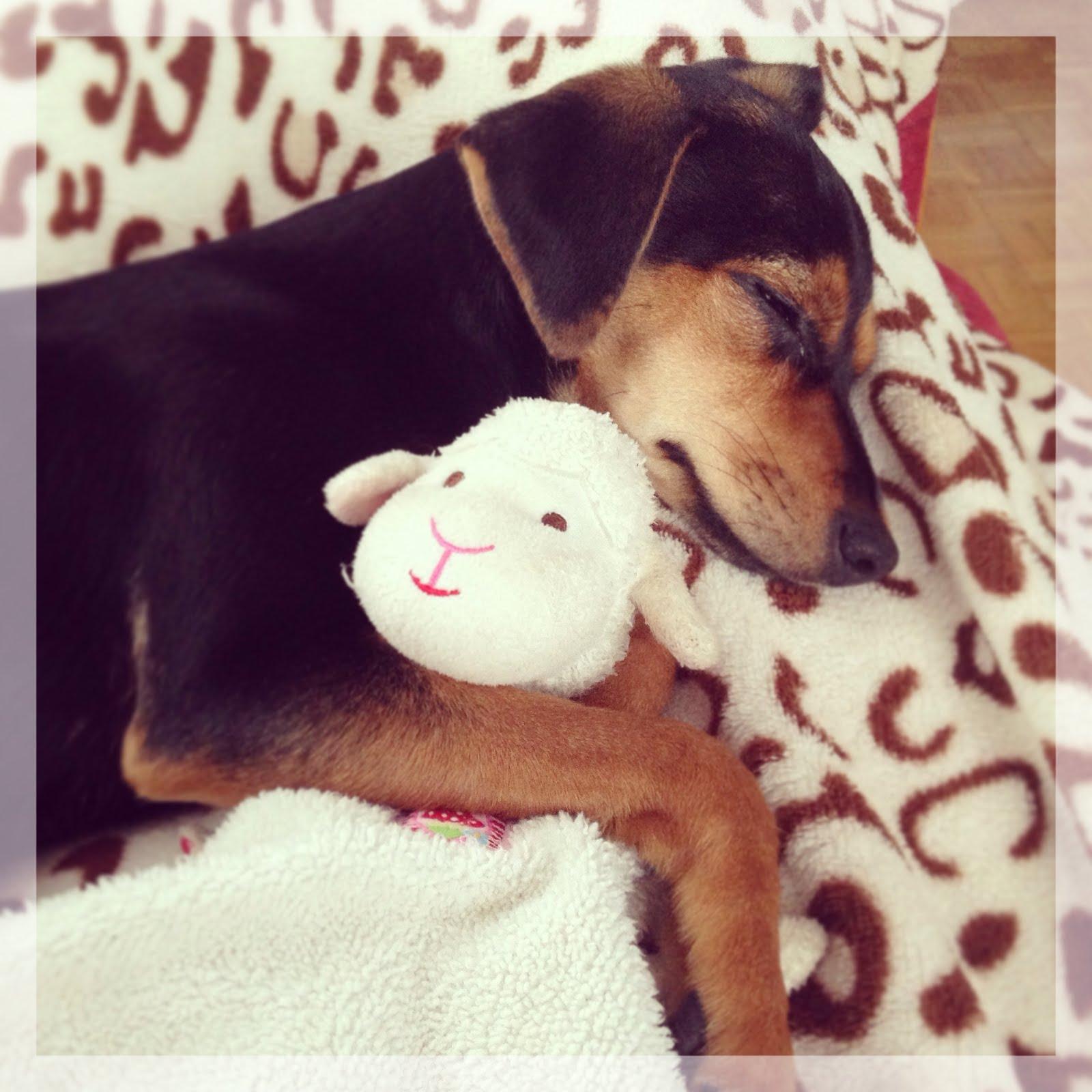 ola's Freunde lieben das Schäfchen von Spigelburg Hundeblog Fellkind Penny