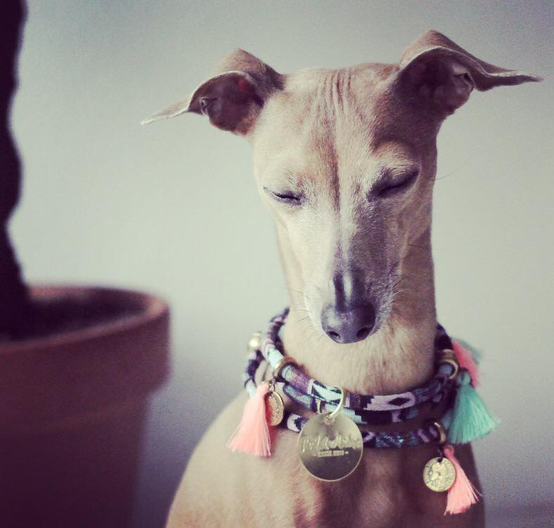 Lolas Wochenrückblick Hundbelog miDoggy