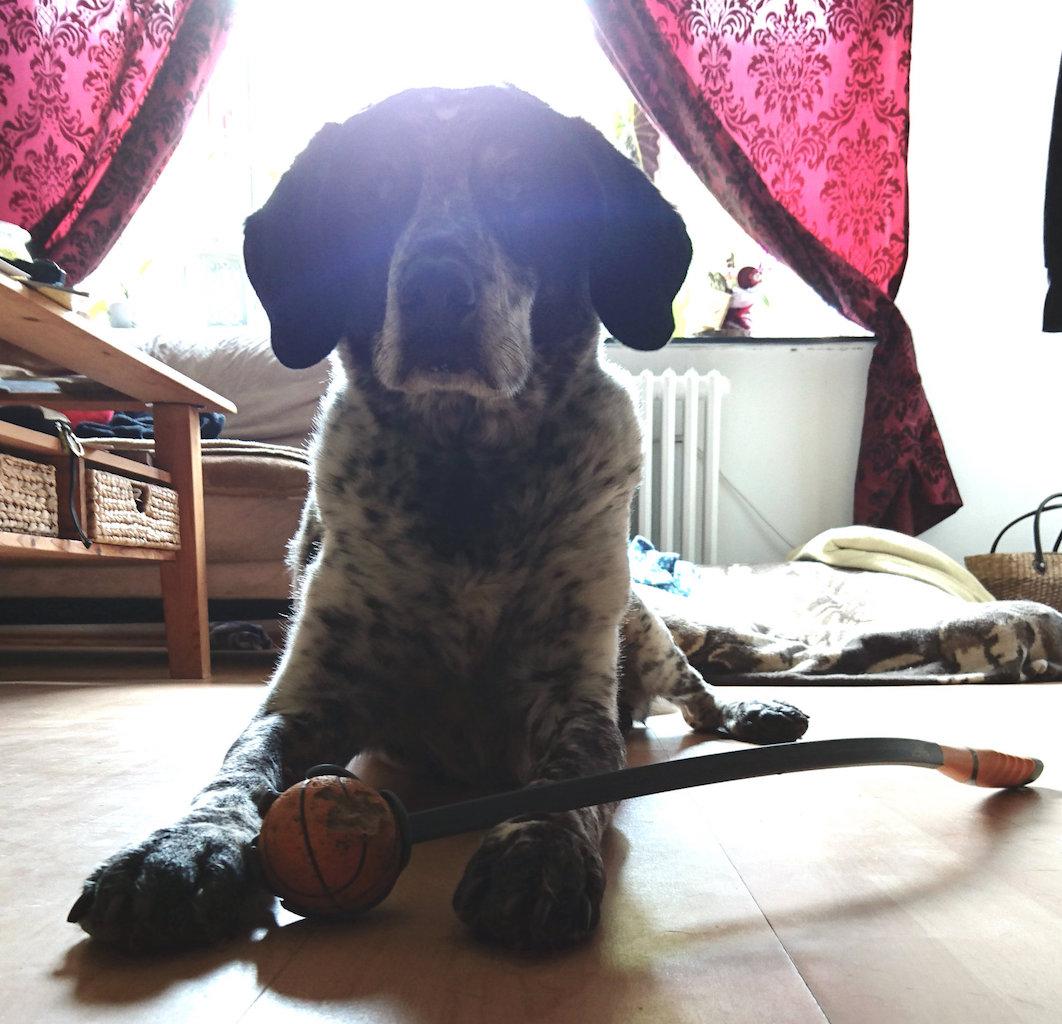 Ballschleuder Trixie Hundeblog Jessie & me