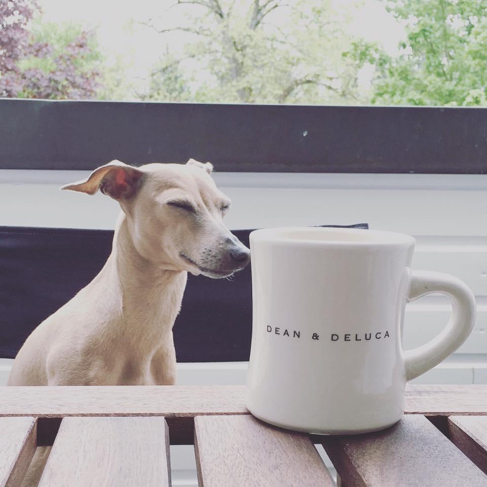 Das Leben beim Hundeblog miDoggy