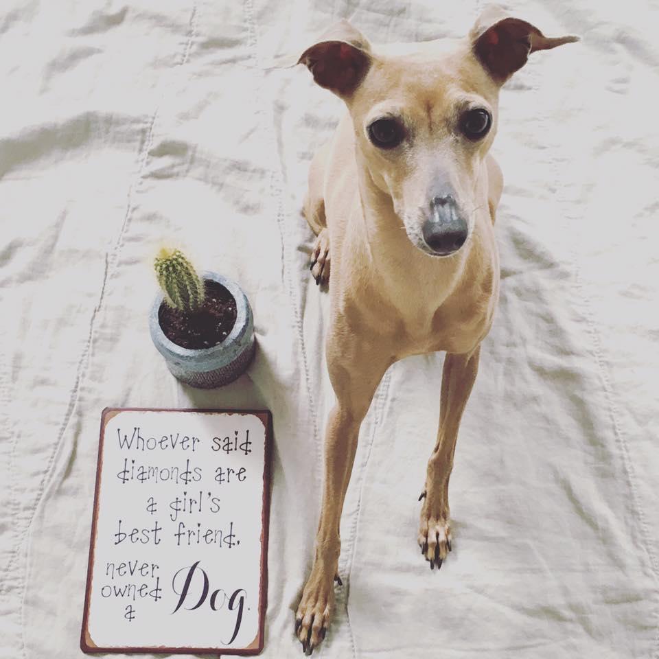 Das Leben des Hundeblog miDoggy