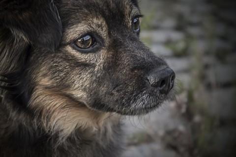 Gelenkprobleme beim Hund vorbeugen – so geht es!