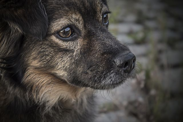 Gelenke schonen Hund vorbeugen
