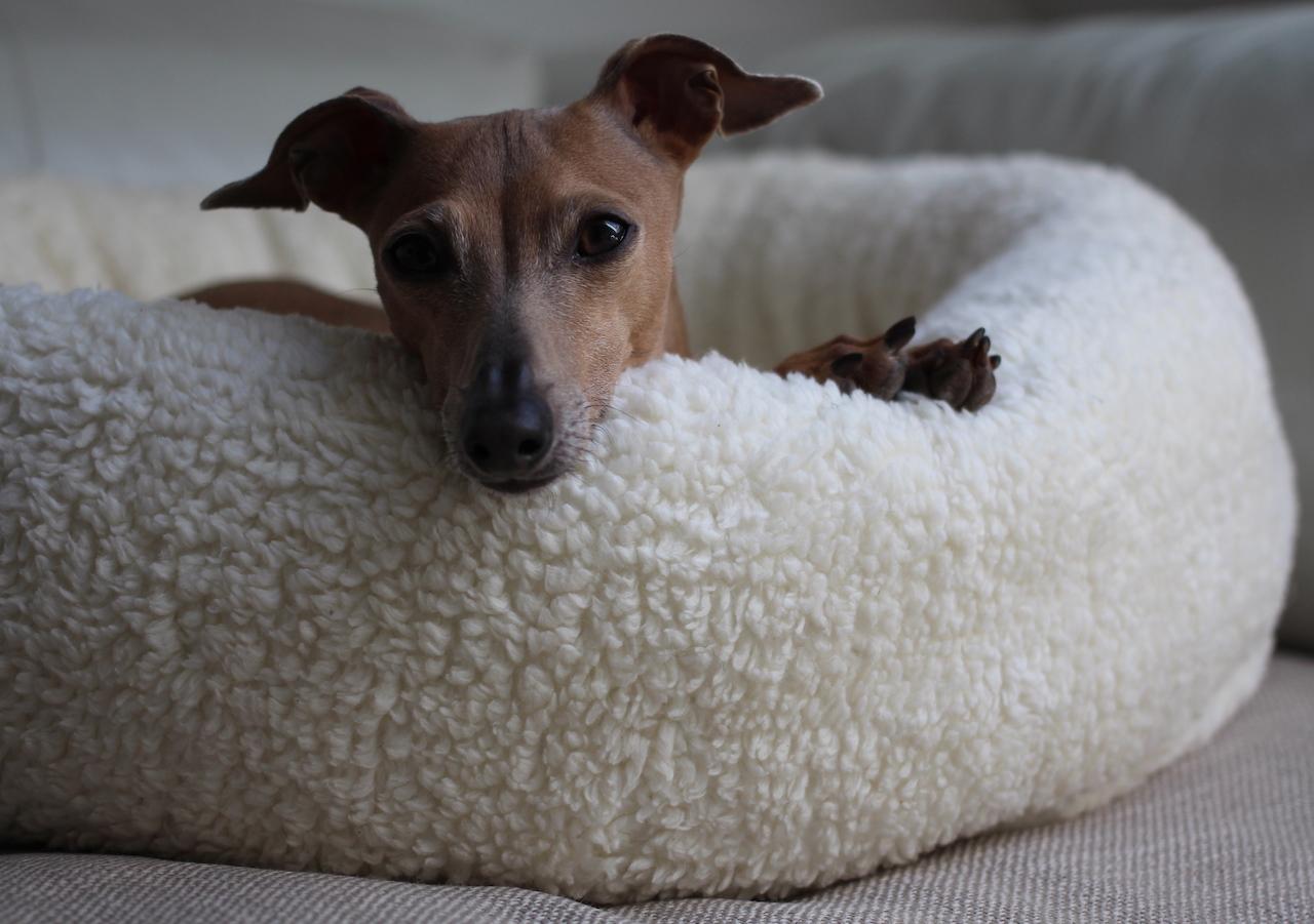 Hundekörbchen JULINKA CLOUD 9 Test