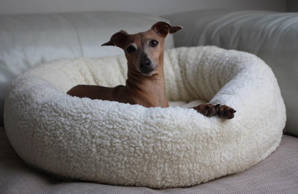 Hundekorb JULINKA CLOUD 9 Test